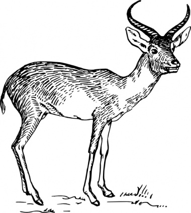Vektor Rehbock Hirsch 4033966 also Hertje Dier Silhouettes 16053053 in addition Stylized Deer Skull Flowers Hand Drawn 520935709 also Deer Rack as well Running Reindeer. on stag head outline