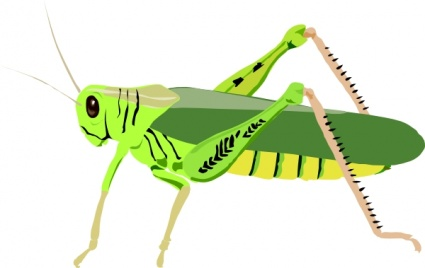 Cartoon Bugs Cavalletta Insect Grasshopper Insects Locust vector