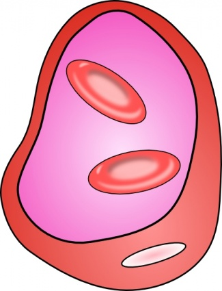 free download of erythrocyte red blood cell clip art vector graphic rh vector me cell clipart free clipart cell