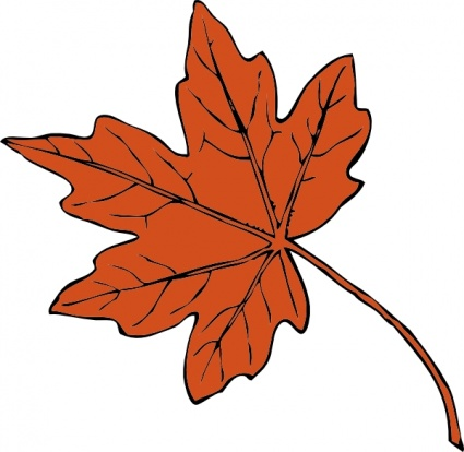 Maple Leaf vs Sycamore Leaf Maple,leaf,plant