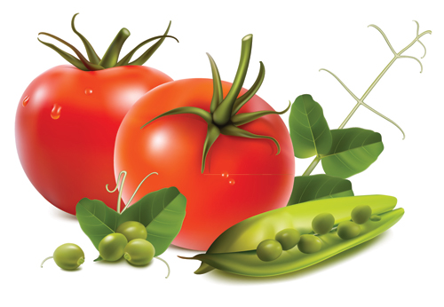 Stock Tomatoes Nuts Garlic Vegetables .vector Free Vector